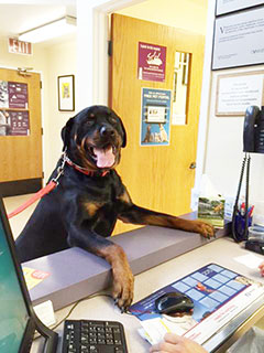 Photo of Rottweiler at front desk