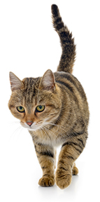 Photo of tabby cat